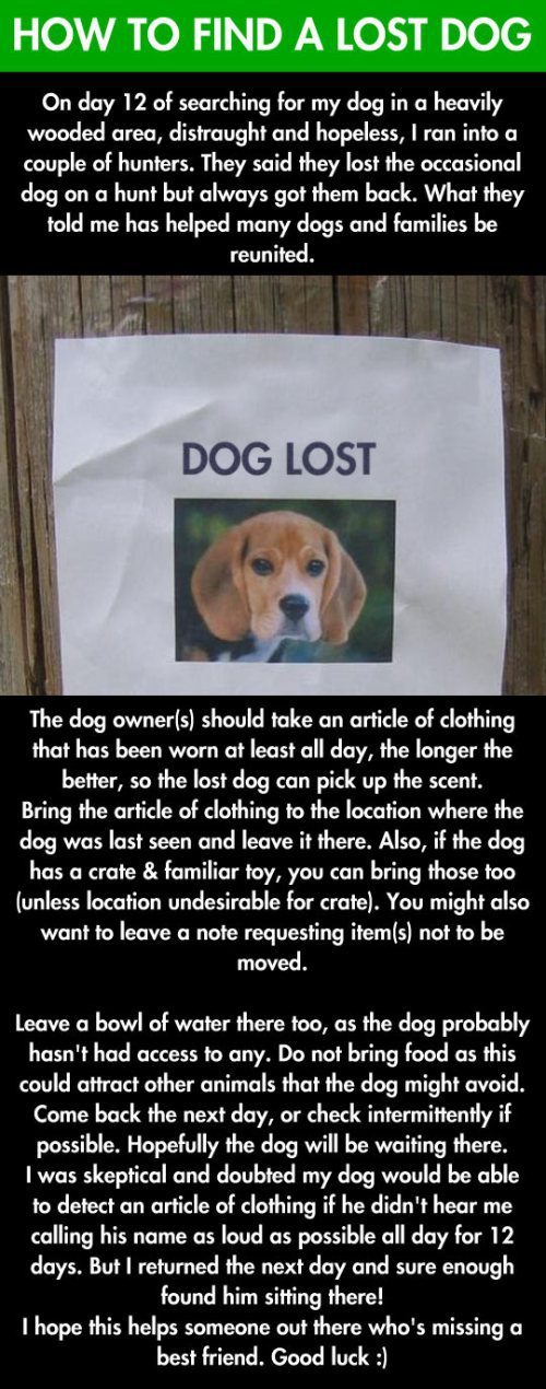 lostdog.jpg